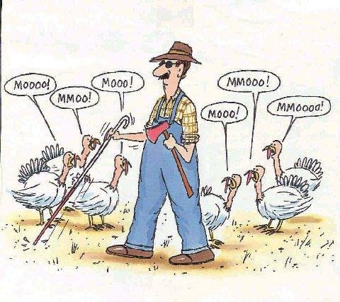 Turkeydayad